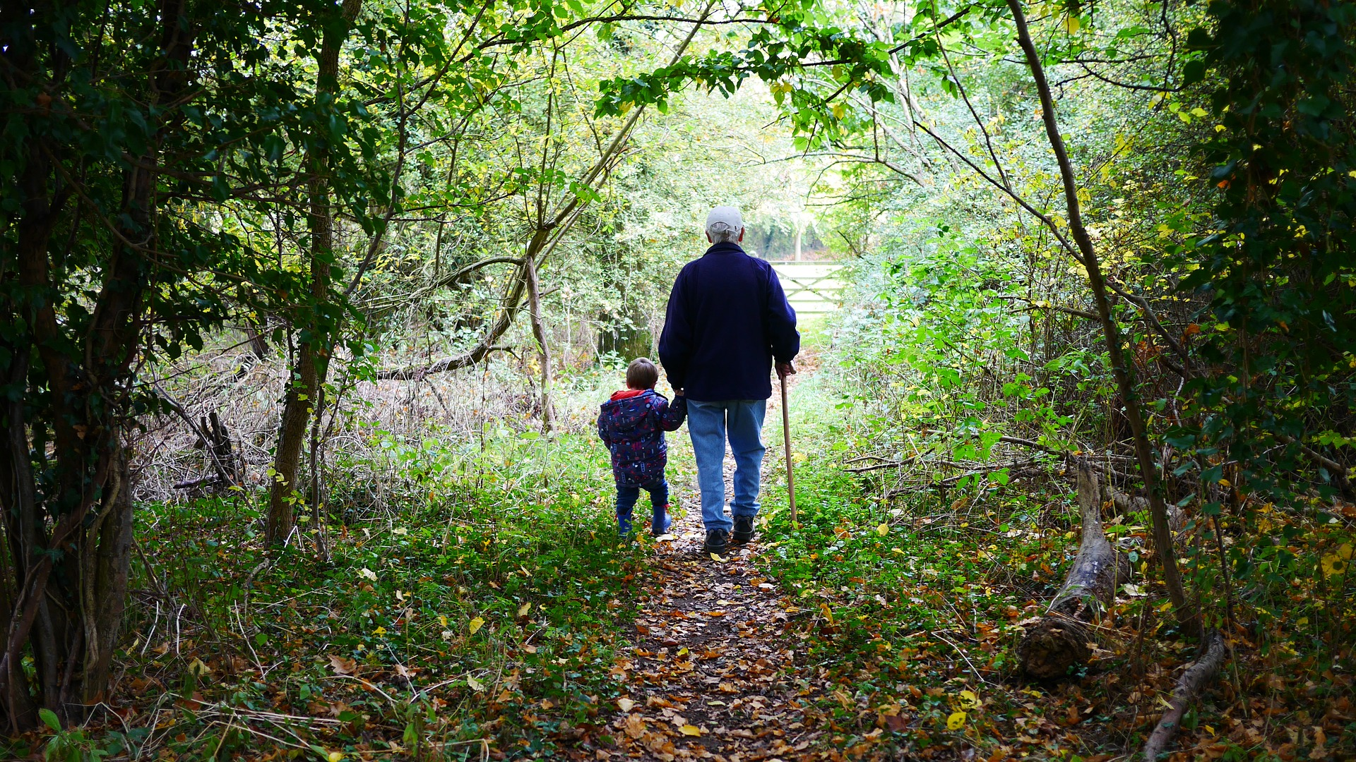 estate planning using your 401k or your IRA